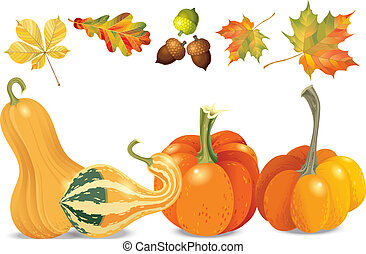 Set of autumn objects. Pumpkins different types, acorns and leaves. Vector illustration collection.