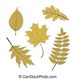 Set of autumn tree leaves