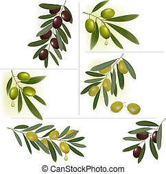 Set of backgrounds with green and black olives. Vector...