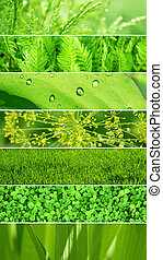 Set of banners with green leaf texture