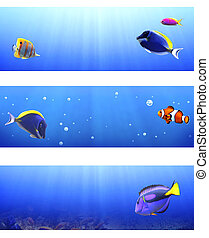 Set of banners with tropical fish
