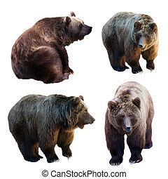 Set of bear over white