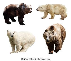 Set of bears over white