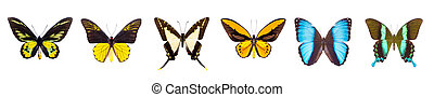 Set of beautiful and colorful butterflies isolated on white....