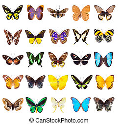 Set of beautiful and colorful butterflies isolated on white.