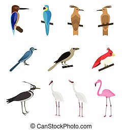 Set of beautiful birds on a white background