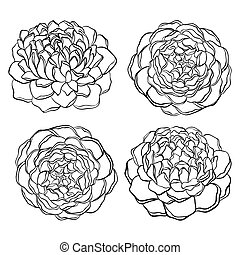 set of beautiful, black and white flower isolated