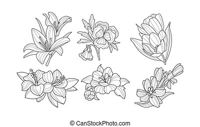 Set of beautiful blooming flowers. Garden plants in linear style. Nature theme. Hand drawn vector illustrations