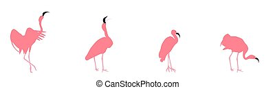 Set of beautiful colored vector illustrations of flamingos in different poses