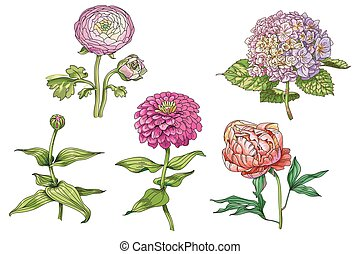 Set of beautiful gentle flowers isolated on white background. Hydrangea, peony and zinnia. A large buds and inflorescence on a stem with green leaves. Botanical vector Illustration.
