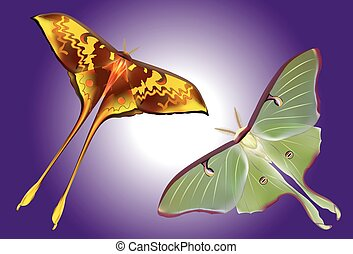 set of beautiful Luna Moth on purple background