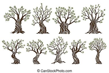 Set of beautiful magnificent olive trees silhouette isolated on white background. Premium quality illustration logo concepts. Elegant olive tree isolated icons
