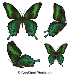 Set of beautiful realistic green butterflies over white