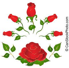 Set of beautiful roses
