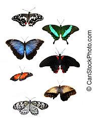 Beautiful tropical butterflies - Set of Beautiful tropical ...