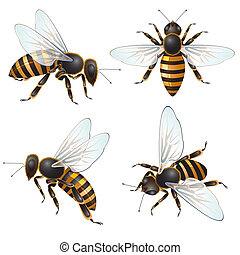 Set of bee, isolated on white