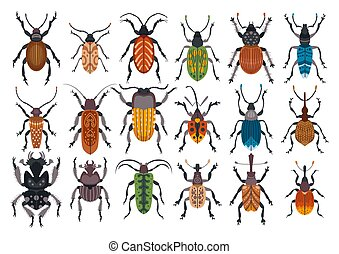 Set of beetles isolated on white background.