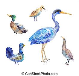 Set of birds living in a swamp. Heron, bittern, black grouse, drake,  wader. Watercolor illustration