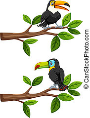 Set of birds on branches