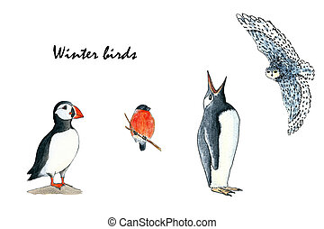 Set of birds- puffin, bullfinch, penguin and owl. Hand drawing watercolor sketch. Colorful illustration