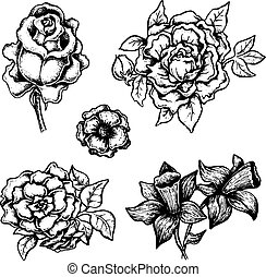 Set of black and white ink style vector flowers
