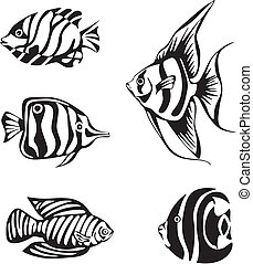 Set of black and white tropical fish