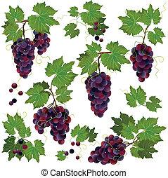 Set of black grape isolated on white background - Set of...