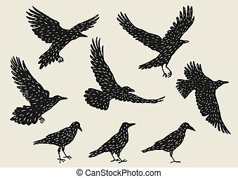 Set of black ravens. Hand drawn inky birds.