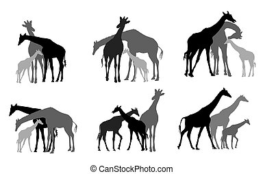 Set of black silhouettes of giraffes family