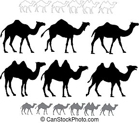 Set of black silhouettes vector camels