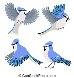 Set of blue jays isolated on a white background. Vector graphics.