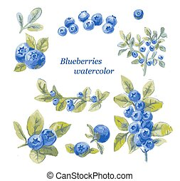 set of blueberry watercolor drawing by hand, vector illustration