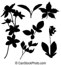 Set of botanical silhouettes. Vector
