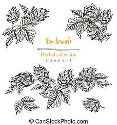 Set of botany hand drawn sketch hop borders and frames isolated on white background. Line drawing. Herbal frame. Natural food collection.