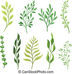 Set of branches with leaves. Vector illustration on a white background.