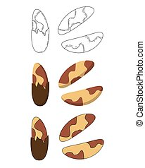 Set of brasil nuts in three styles - outline, flat, cartoon...
