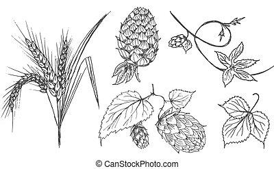 Set of brewing ingredients
