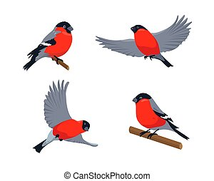 Set of bullfinches in different poses