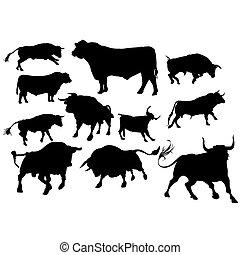 Set of bulls