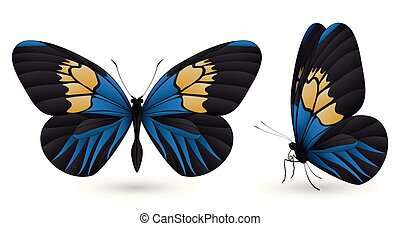 Set of butterflies isolated on white background - Set of...