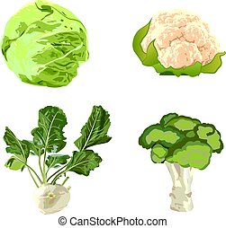 Set of cabbages vector