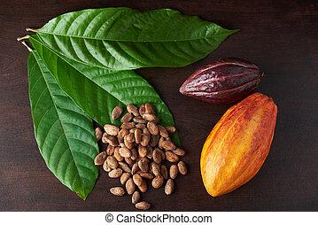 Set of cacao plant