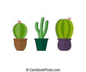 Set of cacti in pots. Indoor plants, isolate
