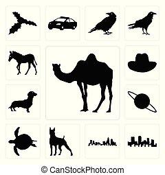 Set of camel outline on white background, colorado north carolina state boxer background icons