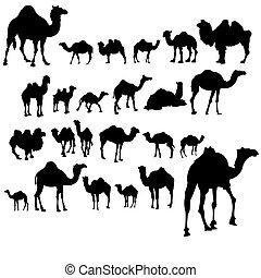 Set of camels