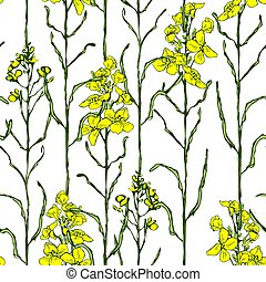 Set of canola flower and oil - Summer seamless pattern with ...