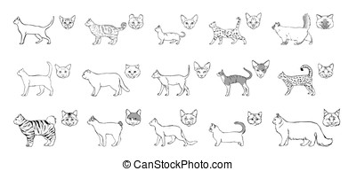 Set of cats breeds, side view, muzzle. Collection with hand drawn monochrome realistic illustration. part 1