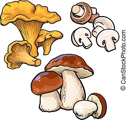 Set of chanterelle, champignon, porcini edible mushrooms sketch style vector illustration isolated on white background. Collection of edible mushrooms - button mushroom, chanterelle and porchini