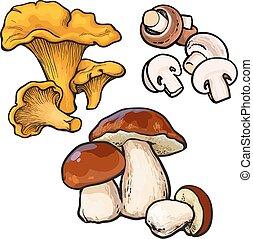 Set of chanterelle, champignon, porcini edible mushrooms...
