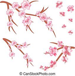 set of cherry branches in bloom. Cherry blossoms. Spring.Vector Illustration .Eps 10.